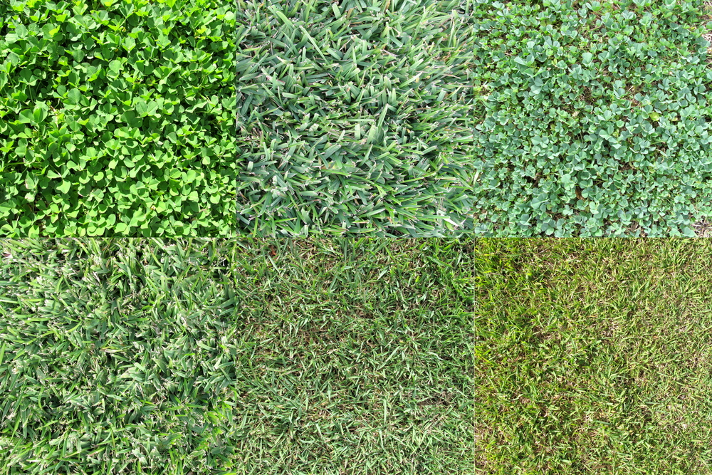 homegearexpert - different types of grass according to gardeners