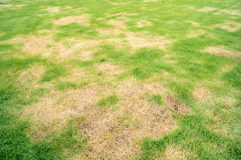 how to repair a damaged lawn according to professional gardeners